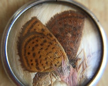 Victorian Moth/Butterfly Pendant Sterling Silver