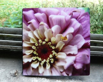 Pink Zinnia - Photo on Wood Block 5x5-  Stock on hand - Custom Print or Made to order -  Professionally Printed