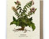 Henbane Card - Plantable Seed Paper - Blank Inside