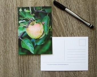 Apple Tree Postcard, Autumn Postcard, Apples Photo Card, Orchard Fall Postcard