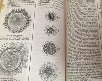 Vintage Medical Book Cyclopedic Medical Dictionary Book