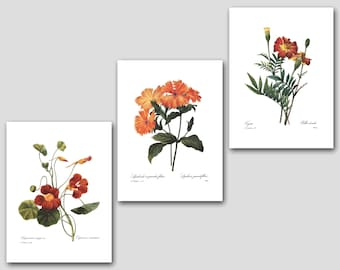 Set of 3 Prints (Orange Room Decor, Orange Flower Art, Orange Nursery Decor, Orange Wall Art) Redoute Botanical Prints
