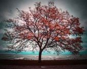 "Fine Art Photographic Print on Metallic Paper- 8"" x 10""- ""Transition""- Fall Tree"