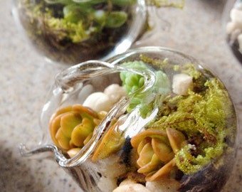 90 Miniature Terrarium Favors