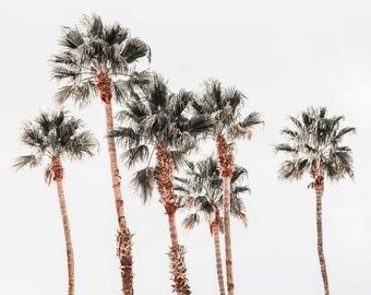 Palm Trees. Desert Palm Tree Images. Landscapes. Professional Color Print. Dark Green. Warm Brown. Fine Art Photography by Liz and Rich