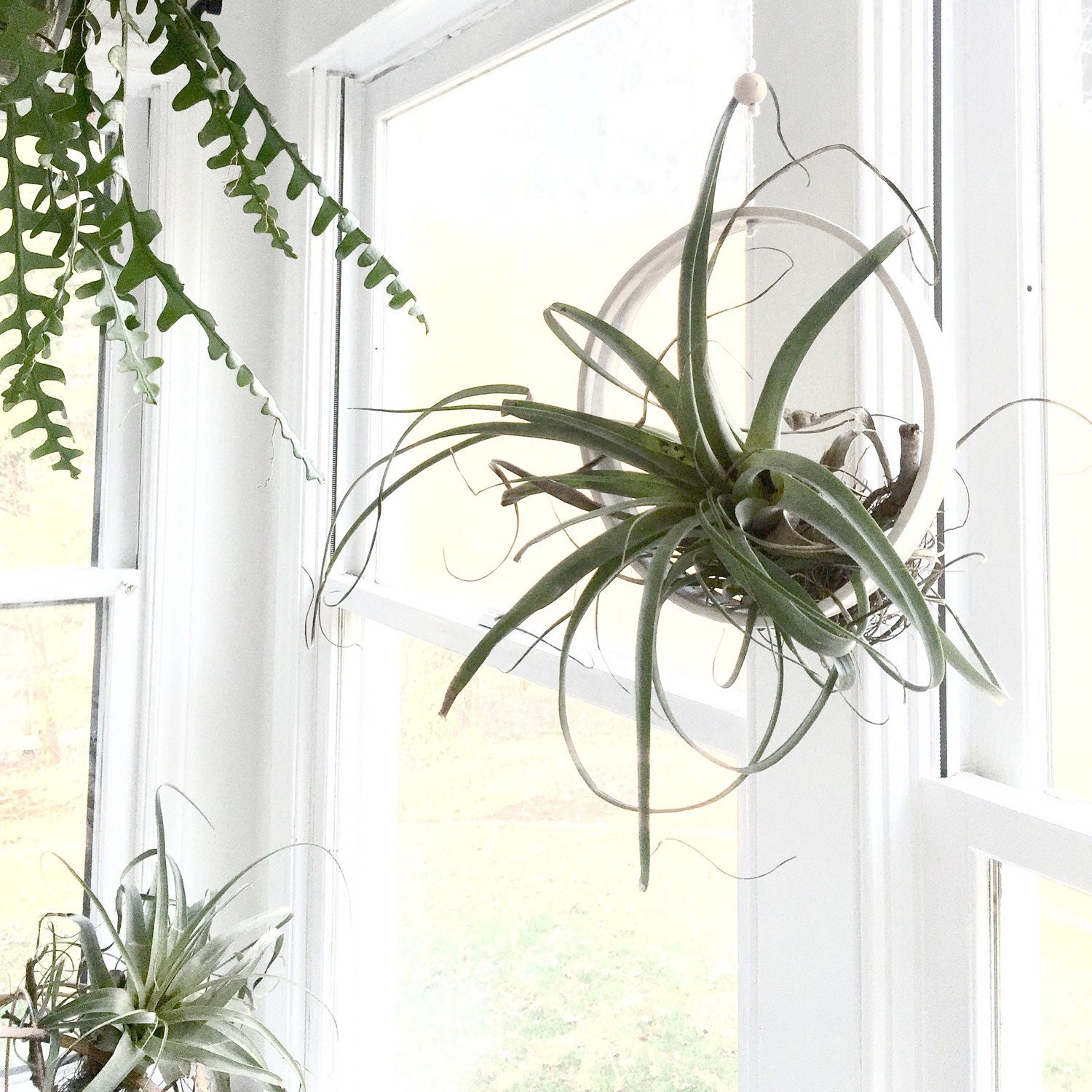 Extra Large Airplant Ring Cradle Sling Hanging Planter ...