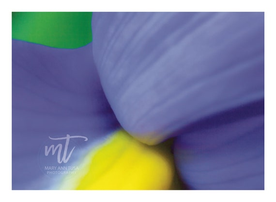 Abstract Art Purple and Yellow  and Green Extreme Petal Close Up