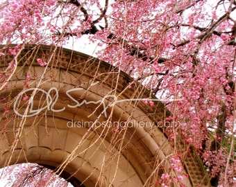 Pair of 5x7  Cherry Blossom, Washington DC photographs, Matte Finish