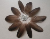 10 Small Dark Brown/ Black Duck Wing Feathers