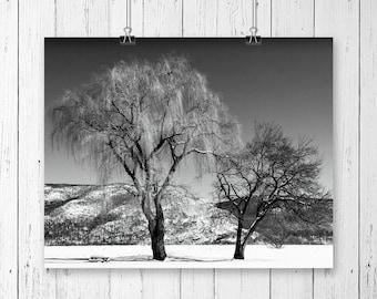 Winter Landscape Black and White Mountain Print Nature Photography Tree Wall Art Gallery Wall Prints Winter Wonderland Ski Lodge Decor
