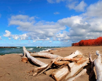 Red tree beach panorama, HDR photograph, Blue, red, tan, panoramic fine photography prints, Crimson Beach