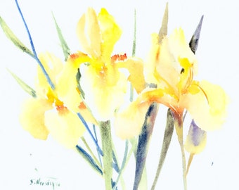 Three Yellow Irises, 14 X 11 in, original watercolor painting, soft yellow wall art floral garden flowers