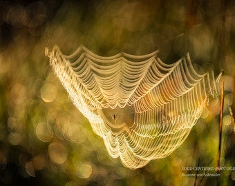 Nature Photography, Spiderweb, Fall Colors, Brown Green Yellow, Golden Light, Earthy Tones, Magical, Fairy Land, Healing Art, Autumn Decor
