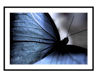 Butterfly Wall Art Print, Modern Photography of Blue Butterfly Wings