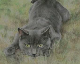 """GREY CAT peek-a-boo  Pastel Print 5"""" x 7"""""""