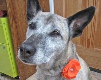 Orange Felt Button Flower for Dogs