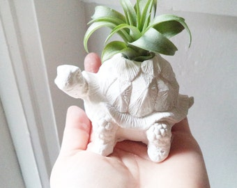 Turtle tortoise planter, air plant holder, tortoise, good health gift, long life, good luck gift, geometric planter with plant