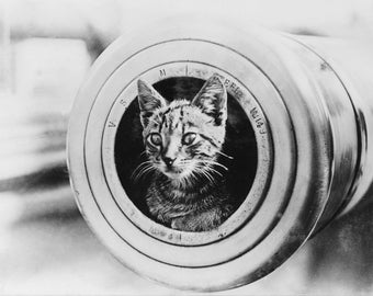 Ship's cat on HMAS Encounter during World War I Photo Print