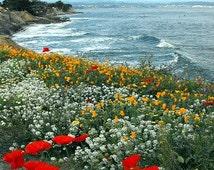 Pacific Northwest Native Wildflower Seeds~Mycorrhizae Inoculated/Bulk Available~