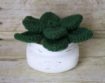 Shortie - Crocheted Succulent