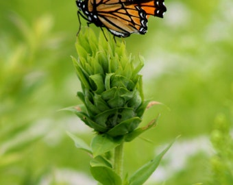 Butterfly Photo Fridge Magnet