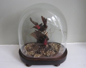 19th Century Victorian Taxidermy Under Glass Dome - Hummingbirds