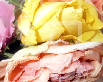 Crumpled Roses Digital Download, Photograph, Print, Flower, Office Decor, Home Decorating, Digital, JPG, Blossom, Romance, Wall Art