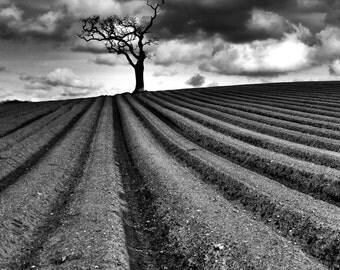 Fine Art Print. Black & White Tree in Field