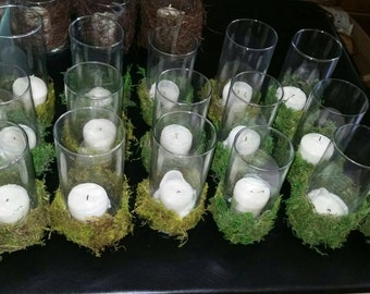 Moss Covered Hurricanes (used)