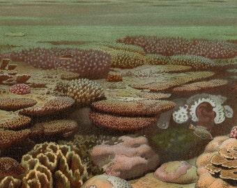 "Antique Coral Reef Print 1904 Living Coral Sea Life Nautical Art Beach Decor Matted 11 X 14"""