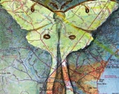 Luna - original, collage art, mixed media, luna moth, Maine