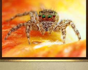 Scary Spider poster print wall art decor