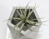 Concrete Geometric Original Medium Icosahedron grey vessel