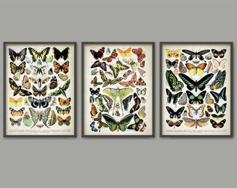 Butterflies And Moths Art Print Set Of 3 - Vintage Larousse Butterfly Book Plate Prints - Entomology Illustration - Insect Biology AB478