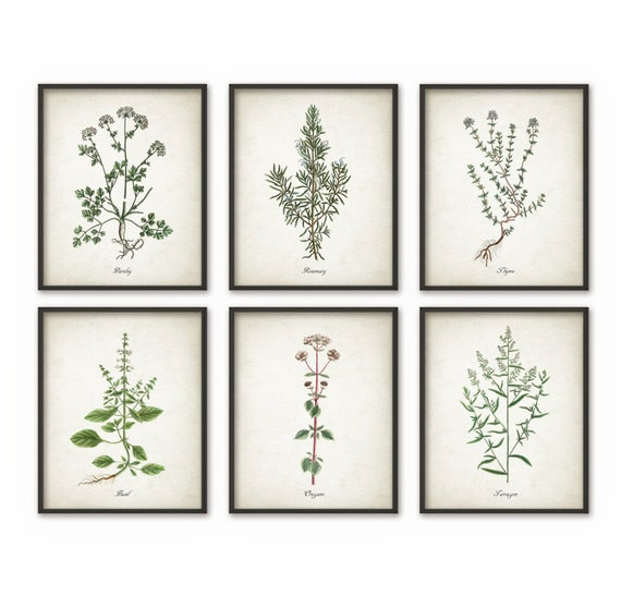 Kitchen herbs wall art print set of 6 vintage botanical herb for Kitchen wall prints
