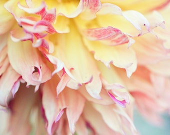 "Discounted 8x10"" dahlia photo print - pale yellow and pink botanical art print, abstract, petals"