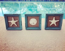 coastal decor, framed starfish, framed sand dollar, framed seashells, beach decor, set of 3, beach house decor, bathroom decor, beachy decor