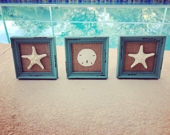 coastal decor, framed starfish, framed sand dollar, framed seashells, beach decor, set of 3, beach house decor, bathroom decor, beachy decor