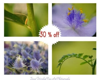 Gallery wall set of 4 nature photo prints 11x14, macro photographs, botanical, lavender green modern wall art flower stamens, Summer Spring