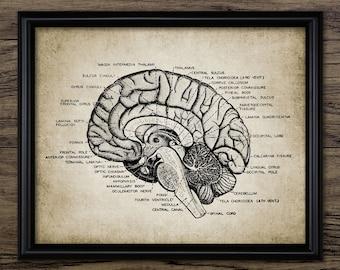 Vintage Human Brain Anatomy Print - Neuroscience - Human Anatomy - Neuroanatomy - Physiology - Single Print #933 - INSTANT DOWNLOAD
