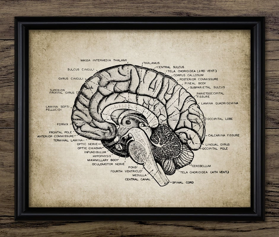 the study of neuroscience The discipline of neuroscience according to us news and world report, there are 367 undergraduate neuroscience programs across the country this is not surprising.