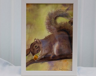 Squirrel with Nut, Animal Painting, Grey Squirrel, Copy, Original Watercolour, 9.5  x 13 Inches, Framed Ready to Display, White Frame