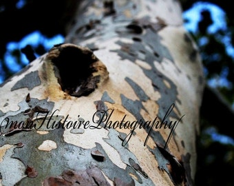 25% off Camo Tree, Nature Photography