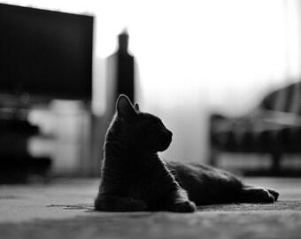 Simon 20, original fine art photography, print, cat, kitten, nature, 8x12,  animal, pet, wild, home, black and white, hungary, makó