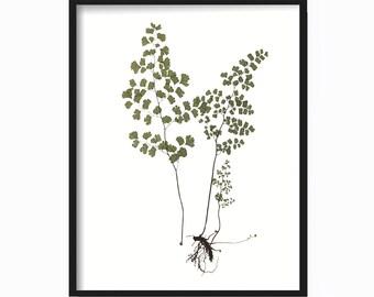 Vintage Fern Print  - Botanical Print - Giclee Canvas Art Print - Antique Botanical Print - Poster - Wall Art - Fern Print