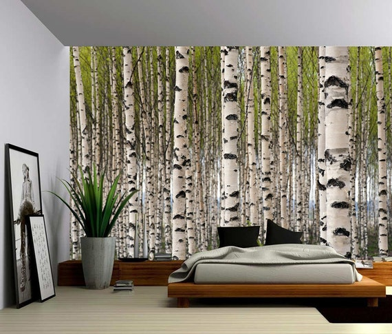 Birch tree forest large wall mural self adhesive vinyl for Birch trees mural