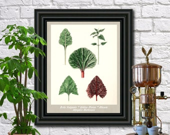 Leaves Botanical Print Vintage Leaves Illustration Kitchen Wall Art Fruit Poster  0451