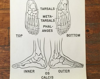 Bones of the Foot Courtroom Anatomy Chart