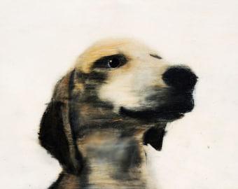 Sam  - original dog art