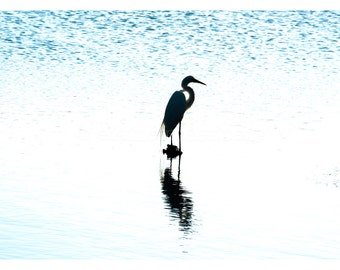 Egret, Wall Art, Nature, Fine Art Photography, Landscape, Wildlife, Birds, Egret, Home Decor, Beach, Blue